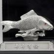 [719] Koi Fish (S)